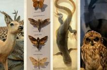 The Caucasus Natural History Museum Collection Renewed Exhibition